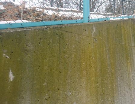 コンクリート壁にコケやカビが生える原因と正しい清掃方法